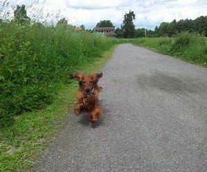 Att bli med valp/unghund/hund med tidigare hunderfarenhet av hundägande.